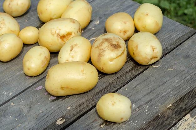 Muitas batatas jovens e frescas em uma mesa de madeira preta.