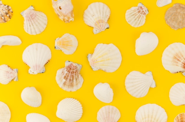 Muitas conchas do mar espalhadas na mesa