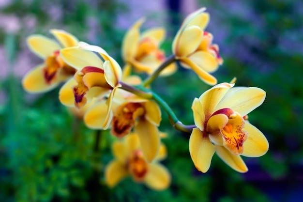 Muitas flores amarelas com salpicos vermelhos no galho