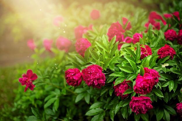 Muitas flores no jardim em um fundo verde