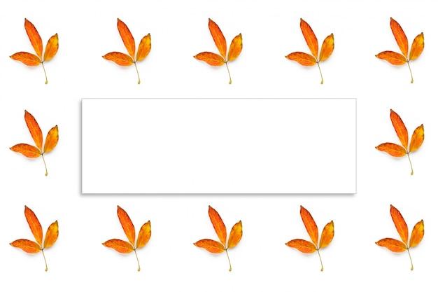 Muitas folhas amarelas de outono isolado e quadro branco fot texto sobre fundo branco