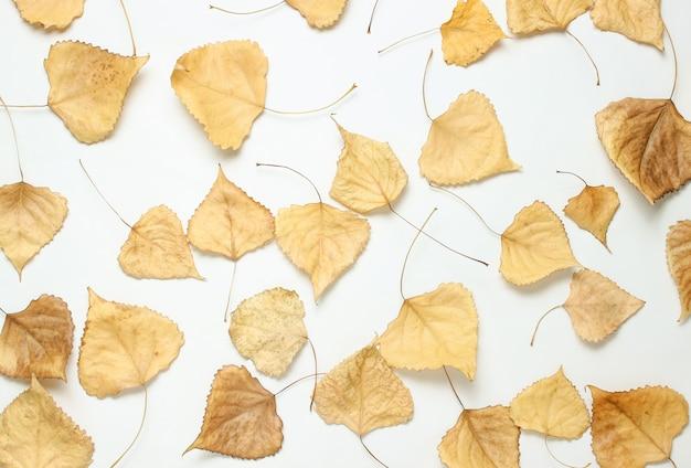 Muitas folhas de álamo caídas. mesa natural, estação do outono