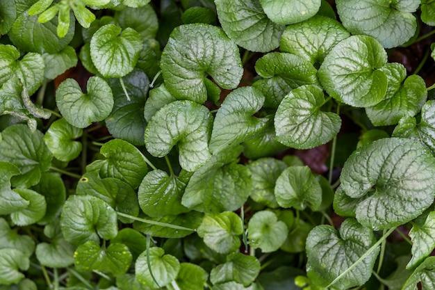 Muitas folhas verdes de plantas que crescem em terra
