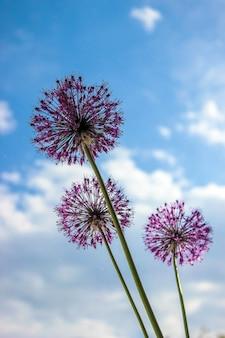 Muitas fotos de flores. colagem. foco seletivo