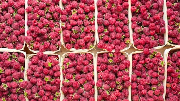 Muitas framboesas frescas em recipientes. alimentos úteis