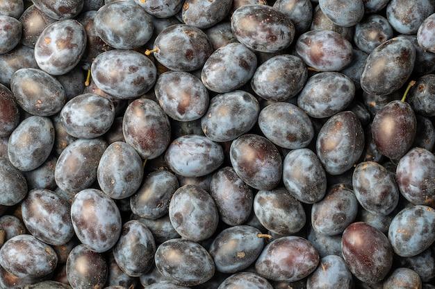 Muitas frutas frescas de ameixas azuis. fundo de textura de ameixas azuis frescas. close up, vista de cima