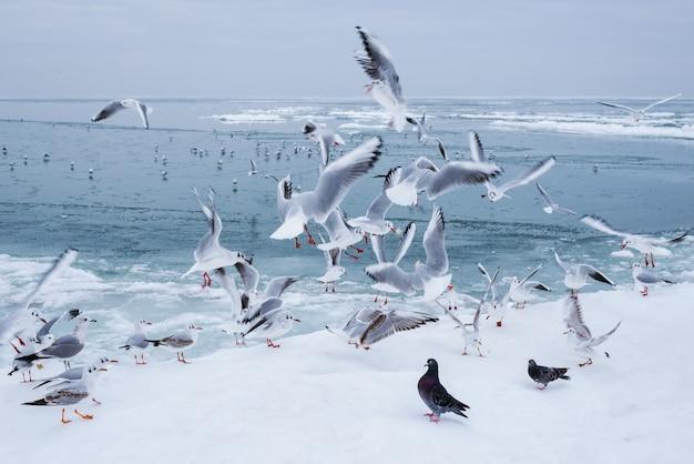 Muitas gaivotas voadoras no passeio da cidade na costa do mar congelado na tarde de inverno