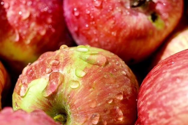 Muitas maçãs maduras vermelhas cobertas com gotas de água transparentes.