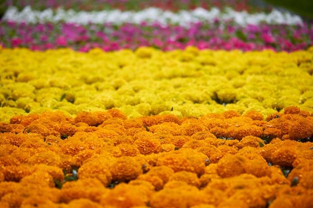 Muitas mudas brilhantes de flores