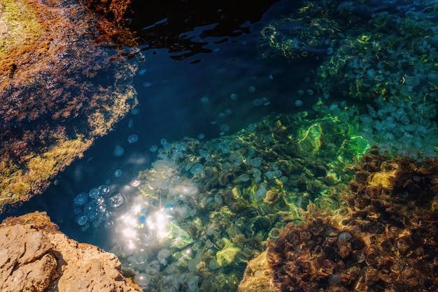 Muitas pequenas águas-vivas na superfície do mar