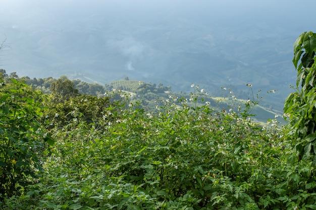 Muitas pequenas flores brancas nas montanhas