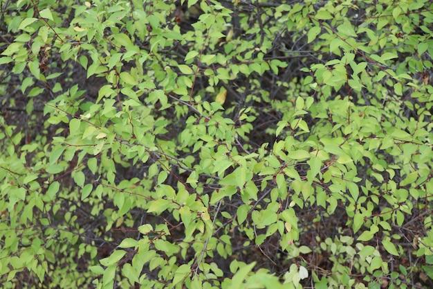 Muitas pequenas folhas verdes fundo de folhas