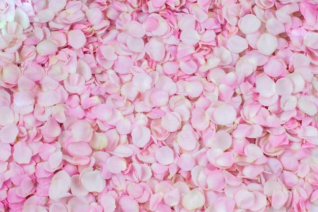 Muitas pétalas de rosa rosa no fundo
