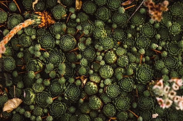 Muitas plantas verdes