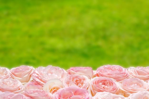 Muitas rosas cor-de-rosa na natureza borrada verde.