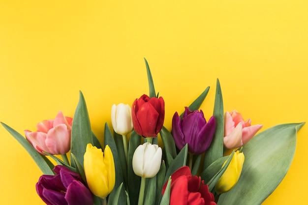 Muitas tulipas coloridas frescas contra um fundo amarelo
