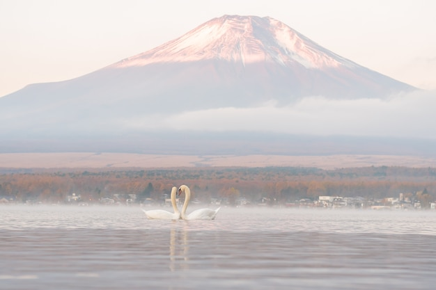 Muito bonito casal branco cisne sentindo romântico e amor no lago yamanaka com o monte. background fuji