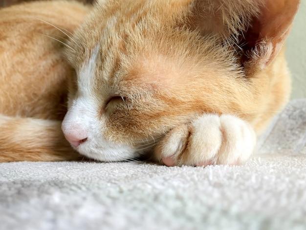 Muito fofo gato ruivo dormindo deitada na cama