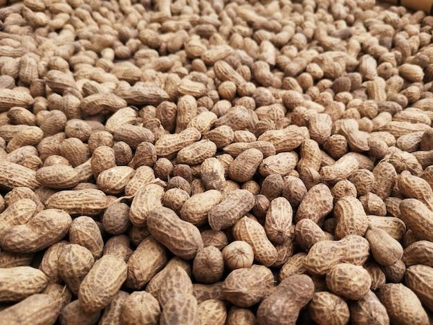 Muitos amendoins estão à espera de serem processados.