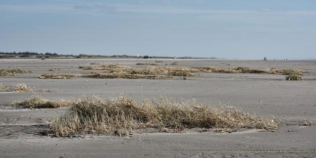 Muitos arbustos e grama seca em uma área arenosa à beira-mar