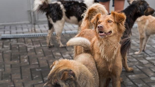 Muitos cães fofos de resgate em um abrigo esperando para serem adotados