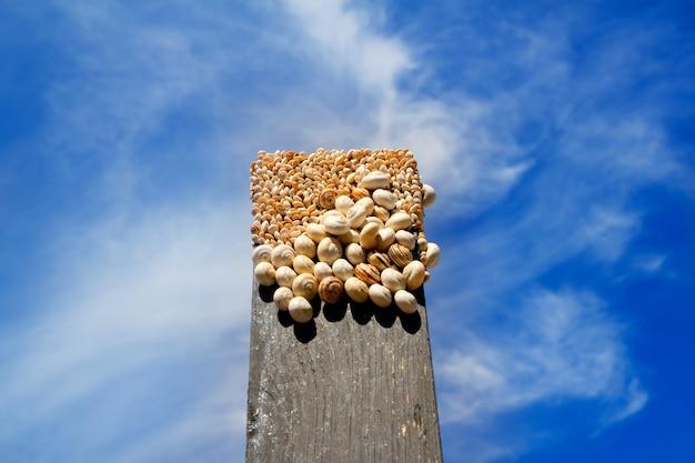 Muitos caracóis no topo de uma madeira preta