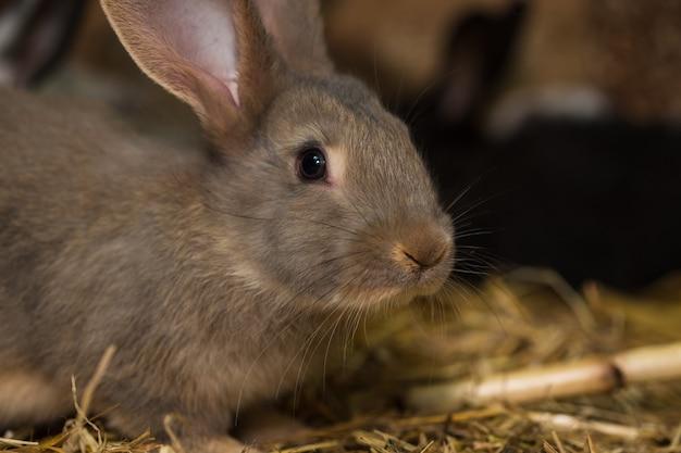 Muitos coelhos na gaiola em uma fazenda