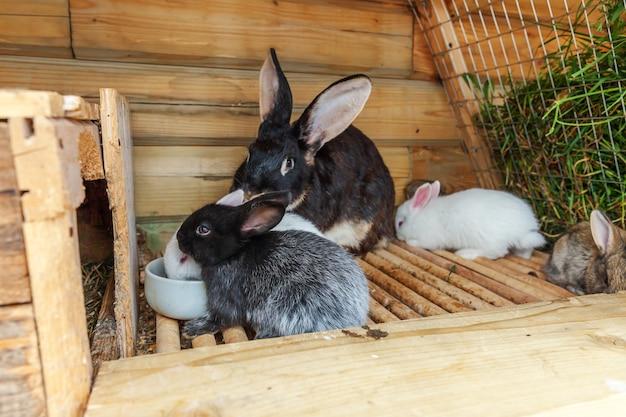 Muitos coelhos pequenos que se alimentam em uma fazenda de animais em coelheira
