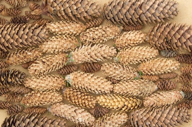 Muitos cones de abeto de diferentes tamanhos e cores ficam horizontalmente no fundo de madeira compensada