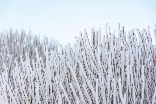 Muitos galhos cobertos de gelo e geada após forte neblina noturna, visão de close-up.