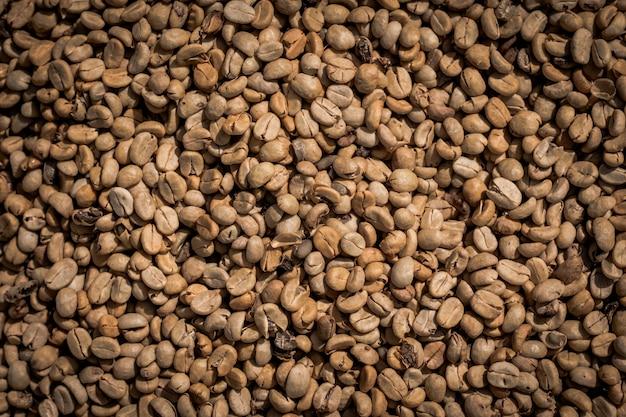 Muitos grãos de café cru estão esperando para ser cozido.