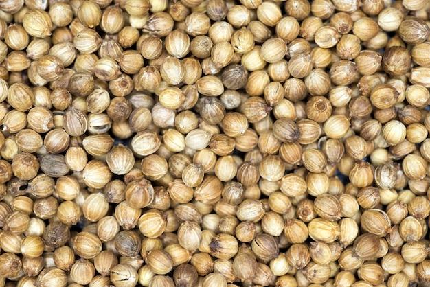 Muitos grãos secos de coentro como pano de fundo