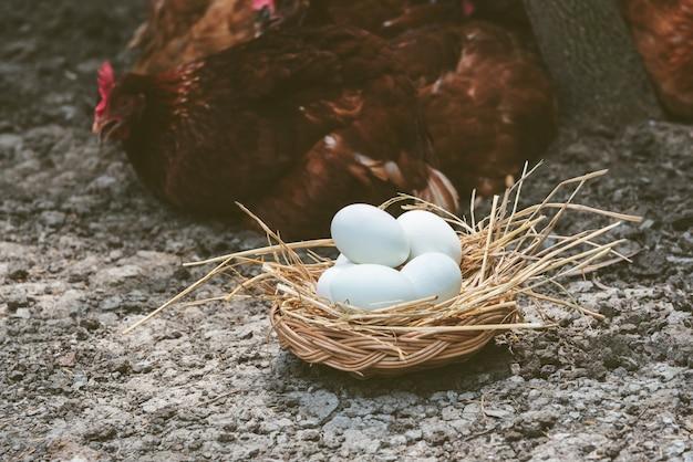 Muitos ovos com casca branca em uma cesta de vime que é coberta com feno no chão