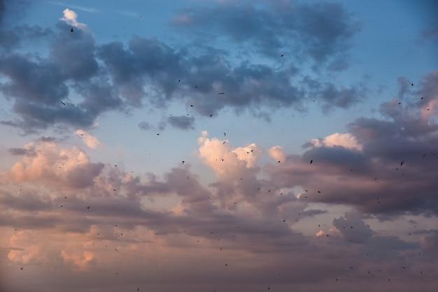 Muitos pássaros voando no céu.