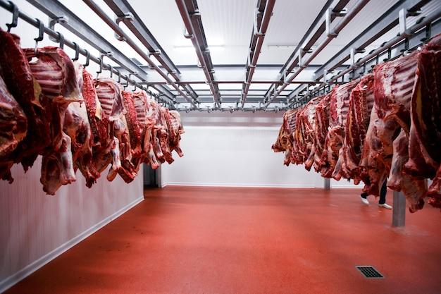 Muitos pedaços de meia vaca frescos pendurados e dispostos em uma fileira em uma grande geladeira na indústria de carnes da geladeira.