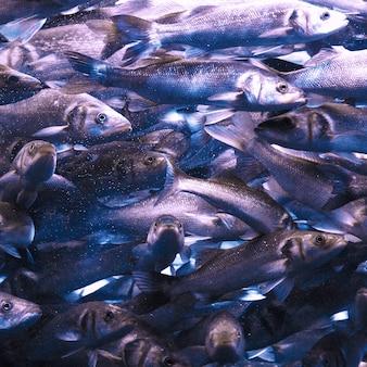 Muitos peixes debaixo d'água. arte mínima.