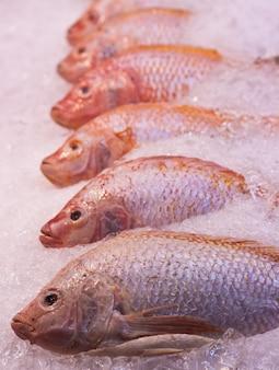 Muitos peixes vermelhos pargo no gelo