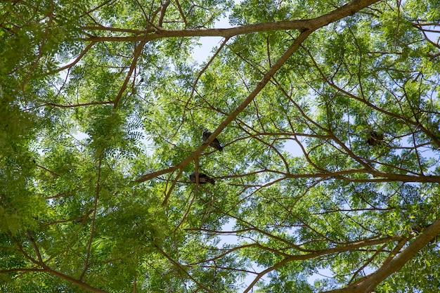 Muitos, pomba, ficar, sob, a, grande, árvore