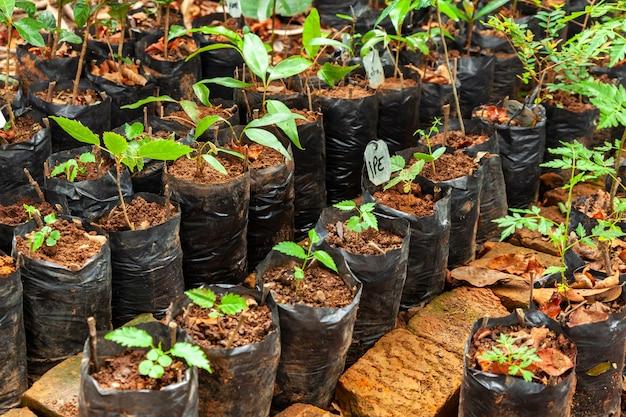 Muitos sacos plásticos diferentes para mudas com plantas pequenas - semeadura crescente