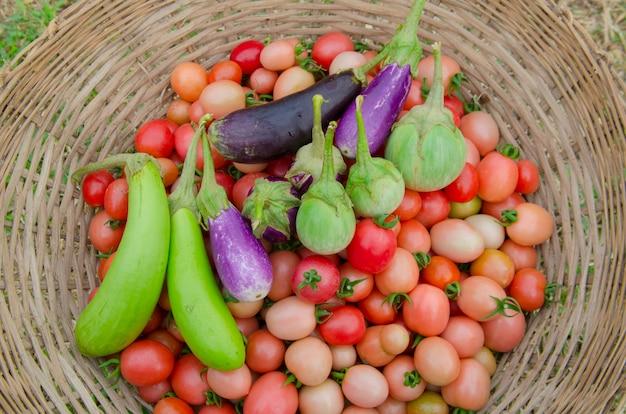 Muitos tipos de vegetais