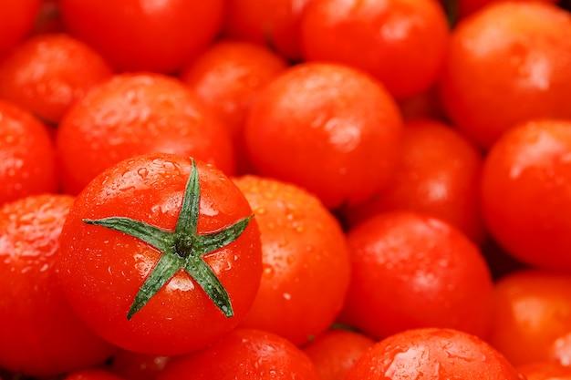 Muitos tomates maduros frescos com gotas de orvalho.