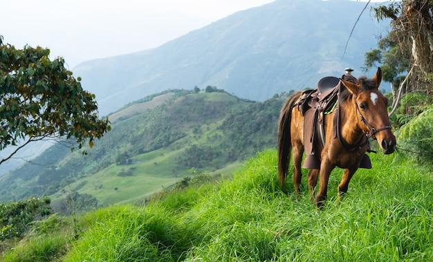Mula com sela pastando em prados de montanha natural. conceito de animais domésticos.