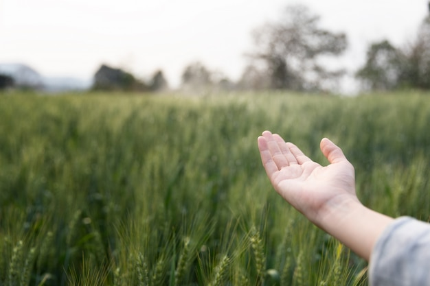 Mulher aberta mão sobre o campo verde de cevada. momento autêntico atmosférico. menina elegante, aproveitando a noite tranquila na zona rural. copie o espaço. vida lenta rural