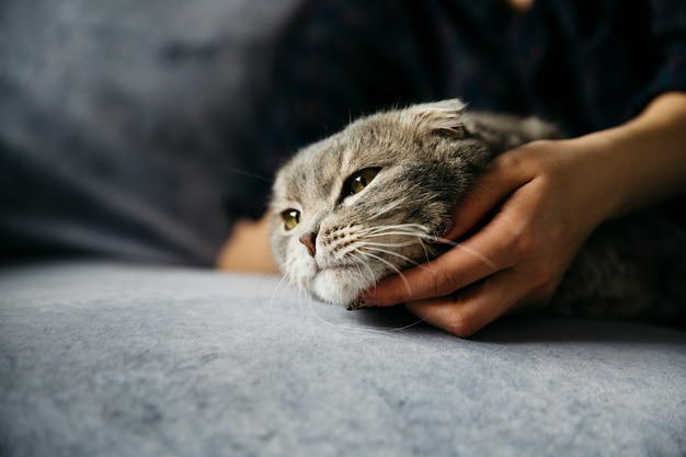 Mulher, acariciando, cute, preguiçoso, gato