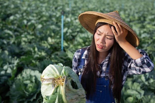Mulher agrícola que está com dor de cabeça por causa de seu repolho podre.