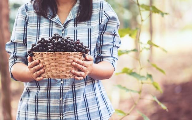 Mulher, agricultor, segurando, cesta, de, cacho uvas vermelhas, colhido, sozinha, em, a, vinhedo