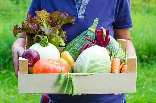 Mulher agricultora segurando uma cesta com colheita fresca: abóbora, abobrinha, cenoura, cópia espaço
