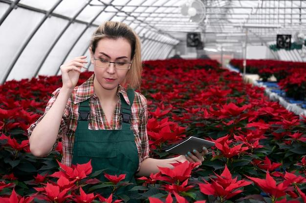 Mulher agrônoma em uma estufa com flores de amendoim vermelha trabalha com dados em um tablet eletrônico