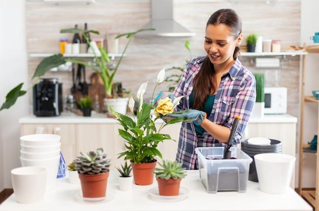 Mulher alegre cuidando das flores em casa, na cozinha aconchegante. usando solo fértil com pá em vaso, vaso de cerâmica branca e plantas preparadas para replantio para decoração de casa cuidando deles
