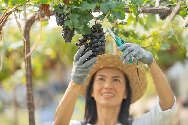 Mulher alegre, sorridente e feliz em um vinhedo, usando um macacão e um chapéu de palha vestido de fazenda